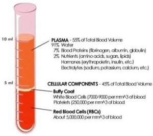 platelet rich plasma therapy prp
