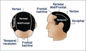 posterior scalp