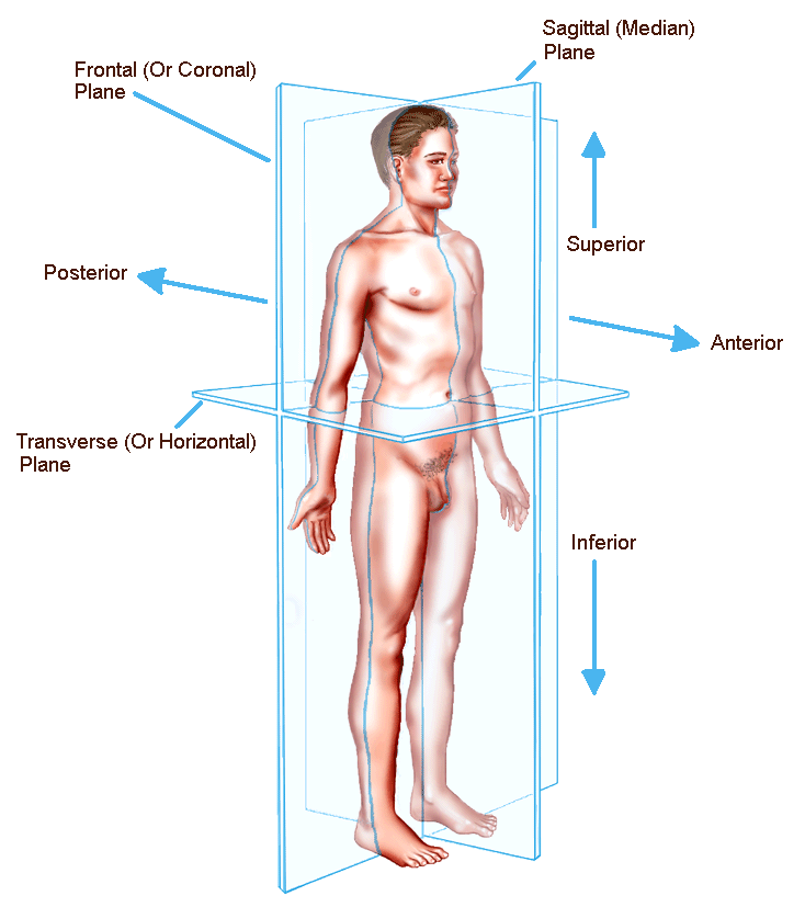 Quadrant  abdomen together with Upper Limb 2 also Forearm Muscles Physical Therapy Forearm Muscles 6e3543 further 288089707386888583 further Salivary Glands. on anatomical position terms