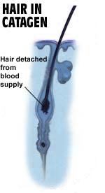hair-catagen